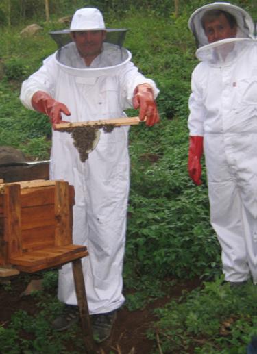 Lawyer turned Bee Keeper - Daniel Weed