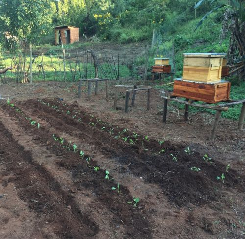 Daniel's newly planted vegetables.
